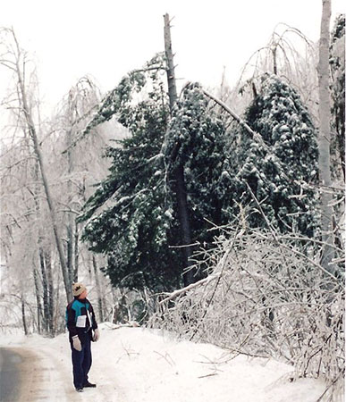 Damaged trees along Notch Road in Gatineau Park during the Ice Storm of '98. Photo: Deb, Creative Commons, some rights reserved