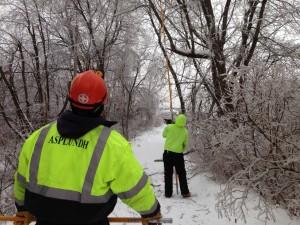 Asplundh guys working the pole saw on my driveway. Photo: David Sommerstein