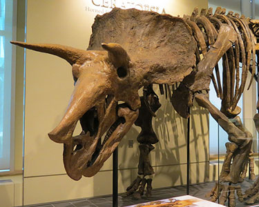 You would expect to see a dinosaur skeleton or two at the Canadian Museum of Nature in Ottawa, but there's a lot more to it. For example--a public online database of 710,000 records of plants, animals, fossils, and minerals. Photo: Robert Linsdell, Creative Commons, some rights reserved