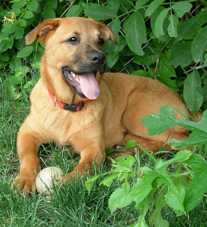 Former Louisville, KY, shelter dog Harry. Photo: Eileen, creative commons, some rights reserved