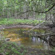 Small pool in the forest after high water. Image courtesy of Nature Conservancy Canada