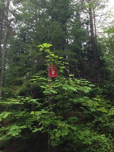 A rare road marker showing the way through winding logging roads and ATV tracks.  Photo:  Julia Ferguson